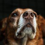 犬の鼻づまりの原因や症状、すぐにできる対処法や治し方!ツボってある?