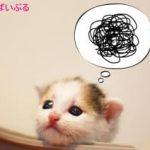 猫のうんちがゆるい原因はストレスや食べ過ぎ?おすすめの対策方法!