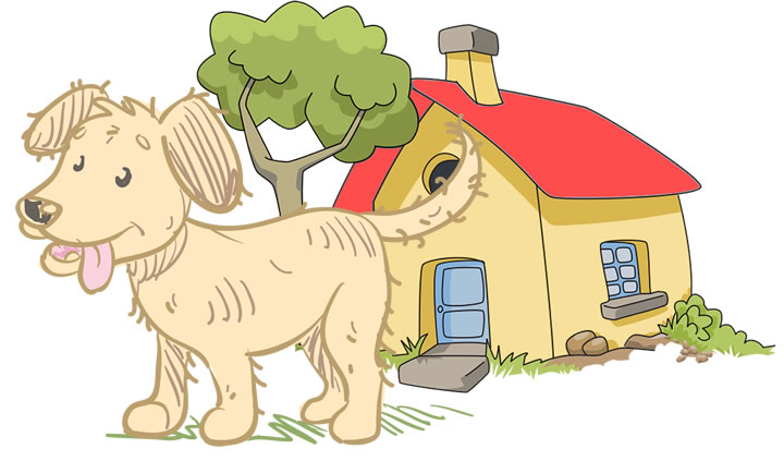 Pets Adventures – Dog services in Worcestershire