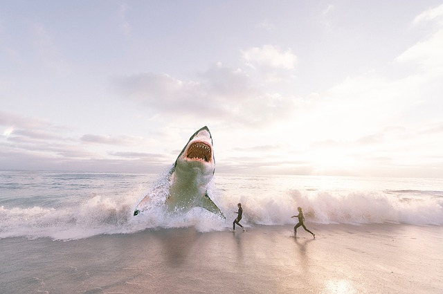 オウムガイ 泳ぎ方 生息地 天敵 種類 イカ