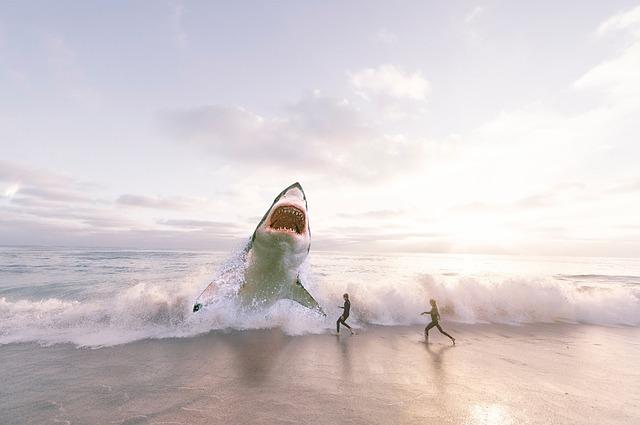 ホオジロザメ 天敵 共食い 淡水 飼育