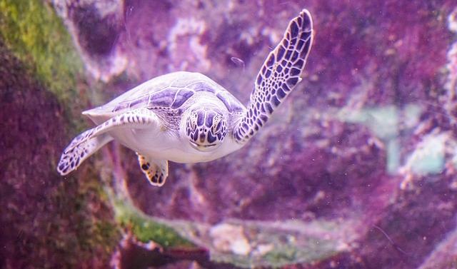 ウミガメ 爬虫類 呼吸 餌