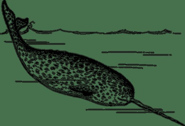 イッカク 水族館 性格 角 役割