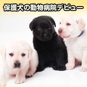 保護犬の動物病院デビュー