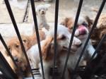 保護犬・里親募集・ペットファーストパラダイス