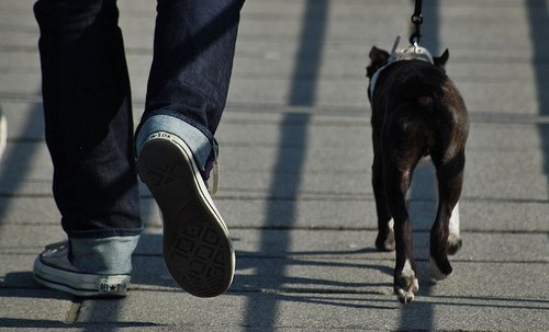 Taking dog on a walk may solve behavior problems