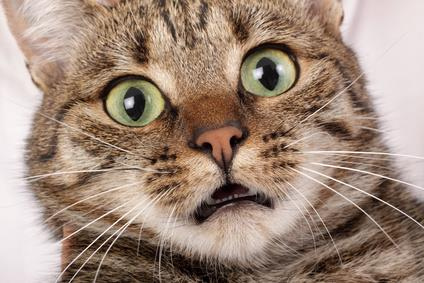 Image result for frightened cat