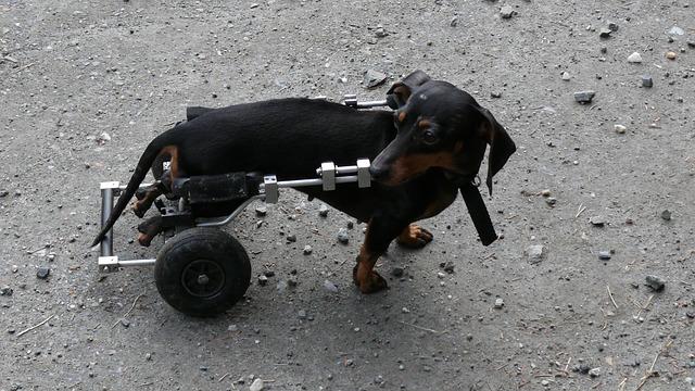 dog-81934_640