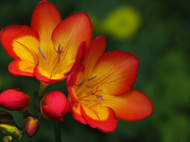 flowers-739219_640