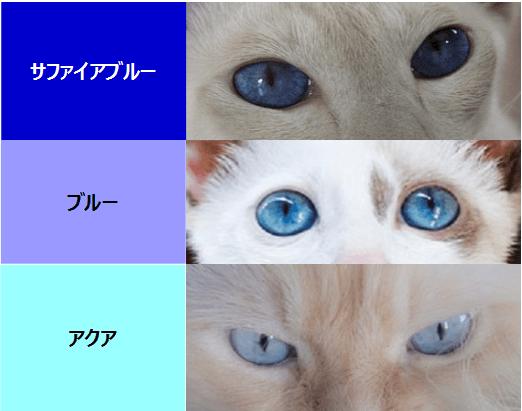猫の青い目(サファイアブルー、ブルー、アクア)