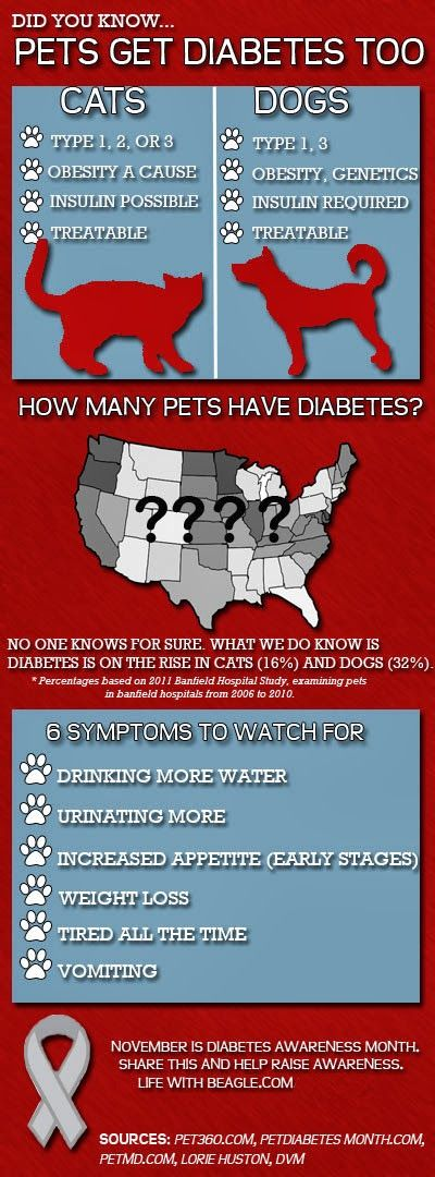 Diabetic Dog Symptoms Of Too Much Insulin : diabetic, symptoms, insulin, Archives, Nanny