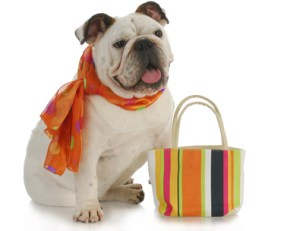 Shop online securely at Pet Presents