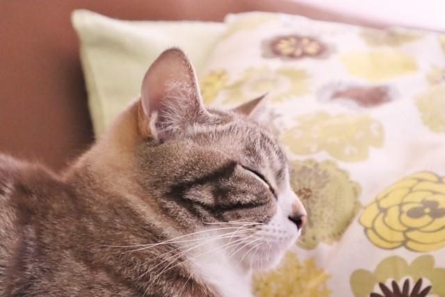 な 嫌い 匂い が 猫