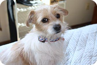 Yorba Linda CA Terrier Unknown Type Small Meet