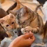 猫が餌を食べない!?こんな時の考えられる原因と対処法
