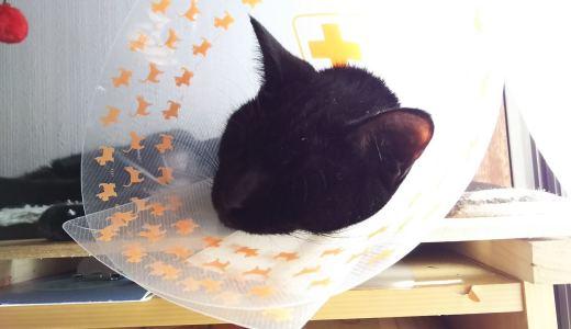 猫が怪我した時の正しい対処法!診察が必要かどうかの判断も!
