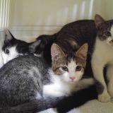 猫の殺処分の現状とは。生き物を飼っていなくても一人ひとりに知ってほしいこと