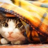 猫は寒がり?冬にしてあげたい猫の寒さ対策!