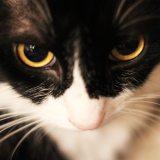 猫 結膜炎