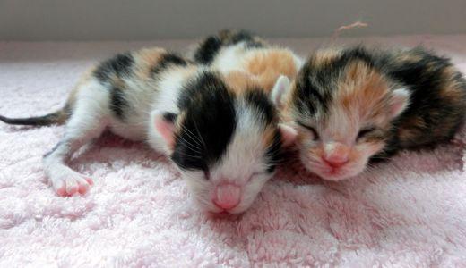 もうすぐ猫の出産!安産の為に飼い主が準備するべきこと
