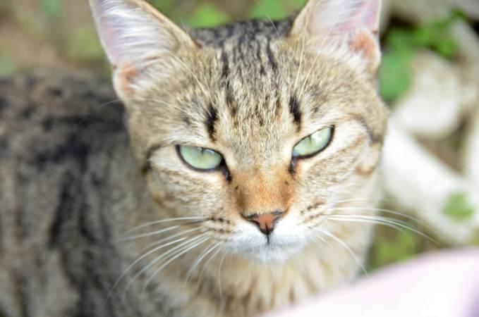 猫 スプレー