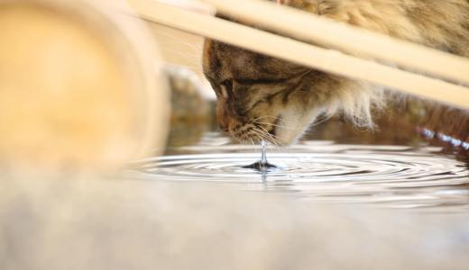 飼い主なら知っておきたい猫に与えて良い飲み物まとめ