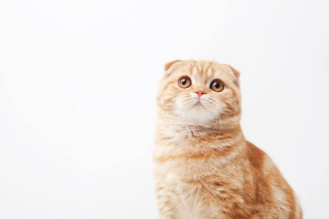 猫 茶トラ 性格
