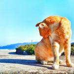 猫 夏 対策