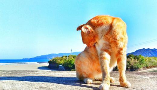 飼い猫の夏対策は行っていますか?愛猫への夏対策をご紹介!