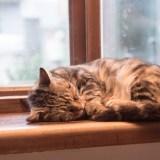 猫の老衰とは?長生きした猫の老衰と飼い主の寄り添い方