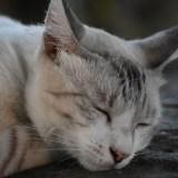 ペットロスで辛い…飼い猫が亡くなった時の喪失感を紛らわすためにできること