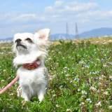 犬も認知症になる!?気をつけたい犬の認知症と予防法