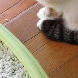 猫が便秘で数日間排泄していない!?そんな時の対処法