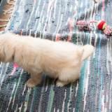 犬のうんちのしつけ方を紹介!うんちやトイレの正しいしつけを学ぼう!