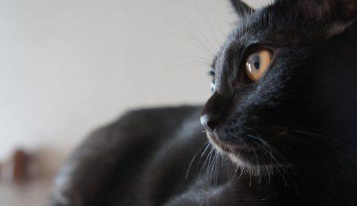 映えても映えなくてもうちの黒猫は天使20選|Twitterで募集した結果