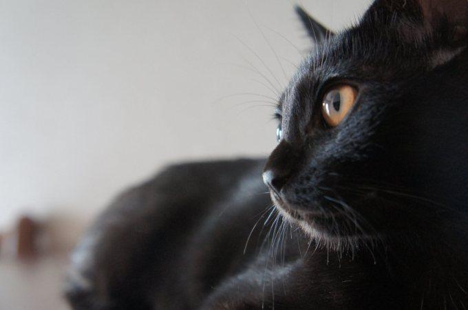 映えても映えなくてもうちの天使なうちの黒猫20選|Twitterで募集した結果