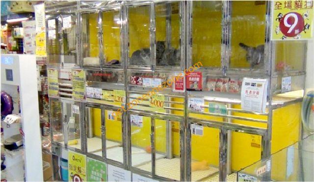 Q-PETS (荃灣大霸街分店)- 荃灣寵物用品. 荃灣寵物買賣. 荃灣寵物店   Zone One Zone - 寵物推介