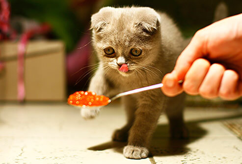 How Much Wet Food Should I Feed My Cat