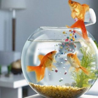 How To Take Care Of a Fish