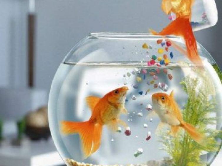 How To Take Care Of a Fish   Best Tips for New Owners 2021
