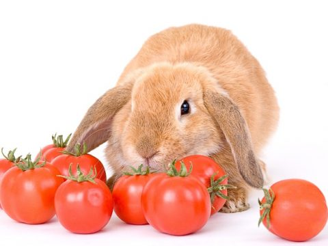 Can Rabbits Eat Tomatoes? Is Tomato Safe for Rabbits?