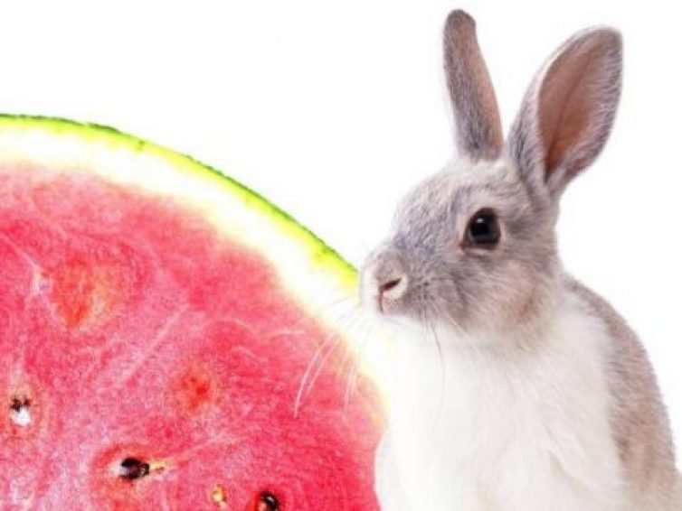 Can rabbits eat watermelon? In watermelon safe for Rabbit