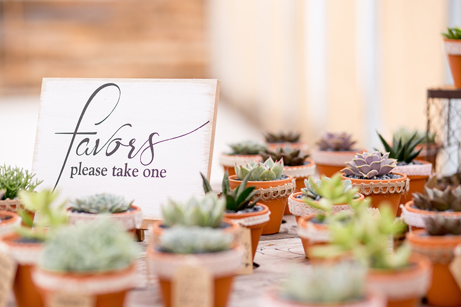 succulent wedding favors for the guests