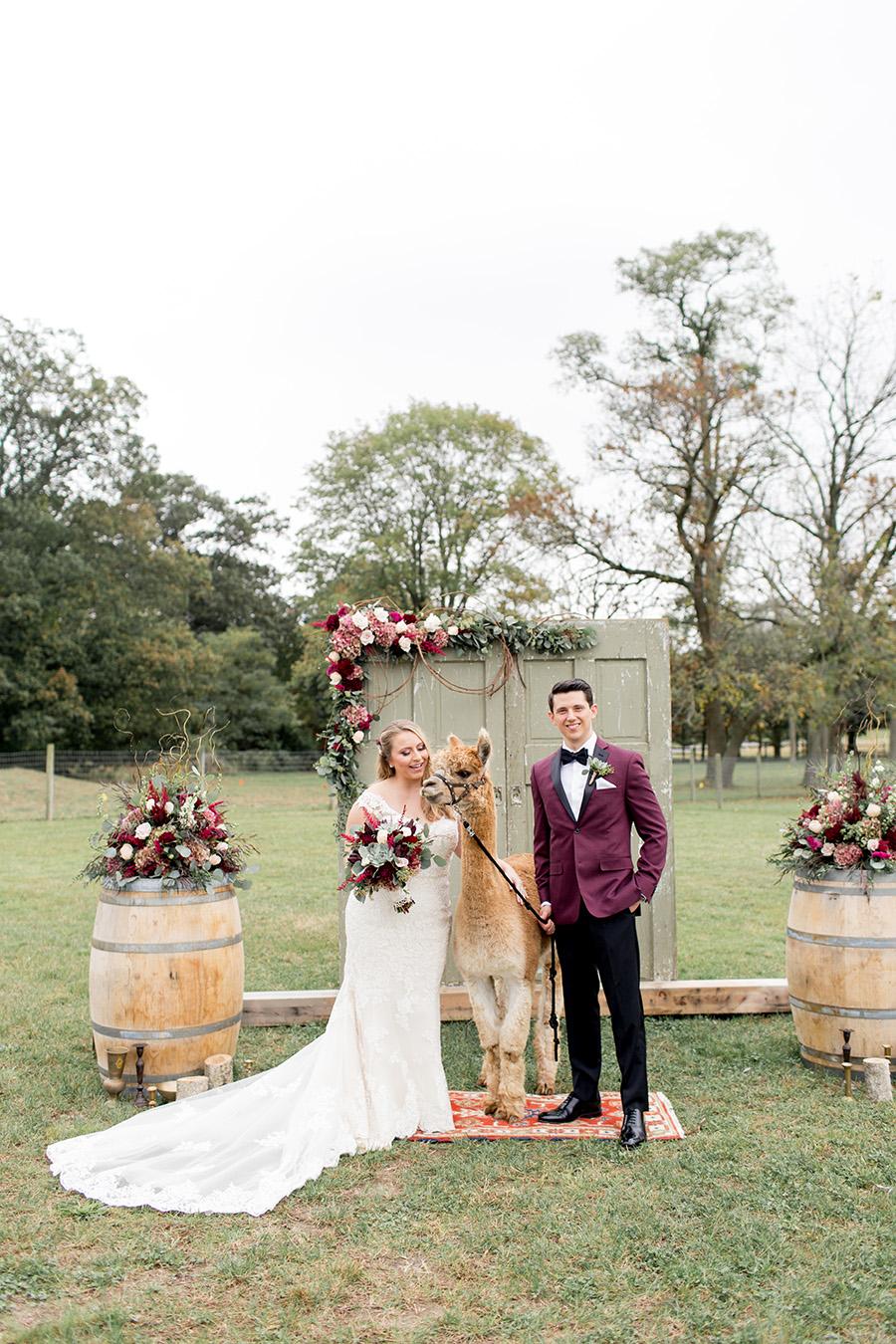 fall wedding at an alpaca farm