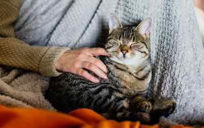5 Must-Read Tips to Know Before Adopting a Cat