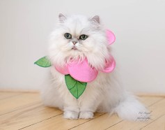 Halloween cat costume photograph by Pet Angel Santa Fe