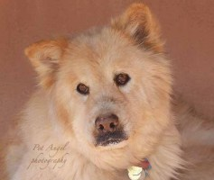 17 year old dog Cedar