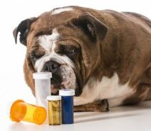 Don't make these dangerous mistekes with pets' medicine