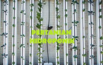 Pertanian Hidroponik