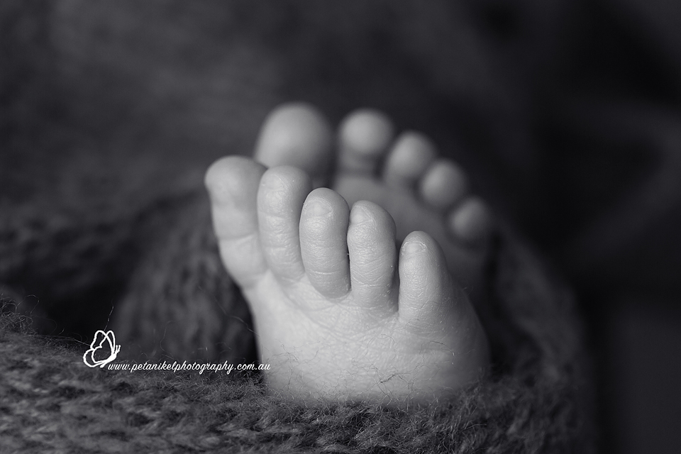 Newborn Photographer Tasmania